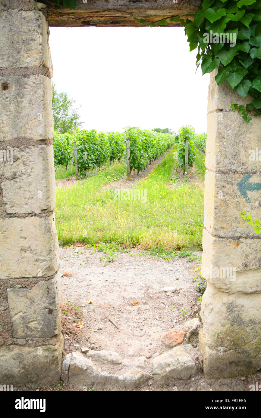 Vineyard seen through an old wall, France - Stock Image