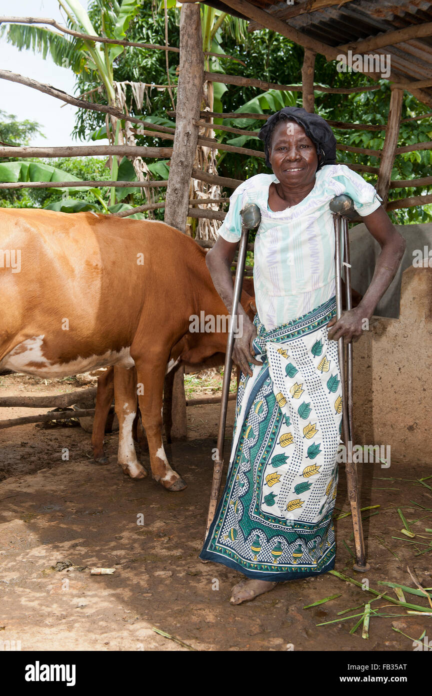 Disabled Kenyan lady on crutches with her dairy cow she recieved from a charity. - Stock Image