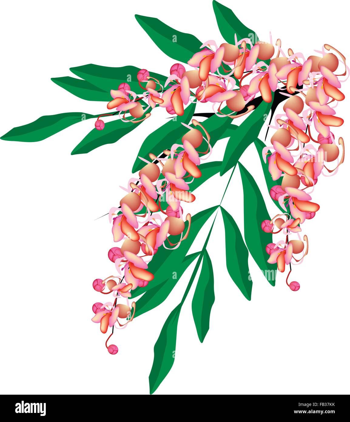 Beautiful Flower Illustration Pink Color Of Cassia Fistula Wishing