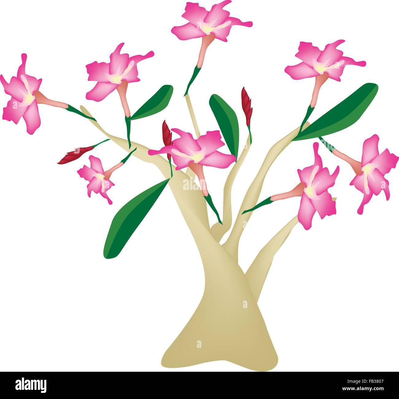 Beautiful flower illustration of pink desert rose or pink bignonia beautiful flower illustration of pink desert rose or pink bignonia isolated on white background izmirmasajfo