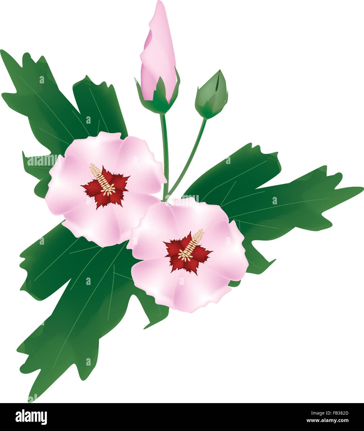 beautiful flower illustration fresh pink hibiscus rose mallow or stock vector image art alamy alamy