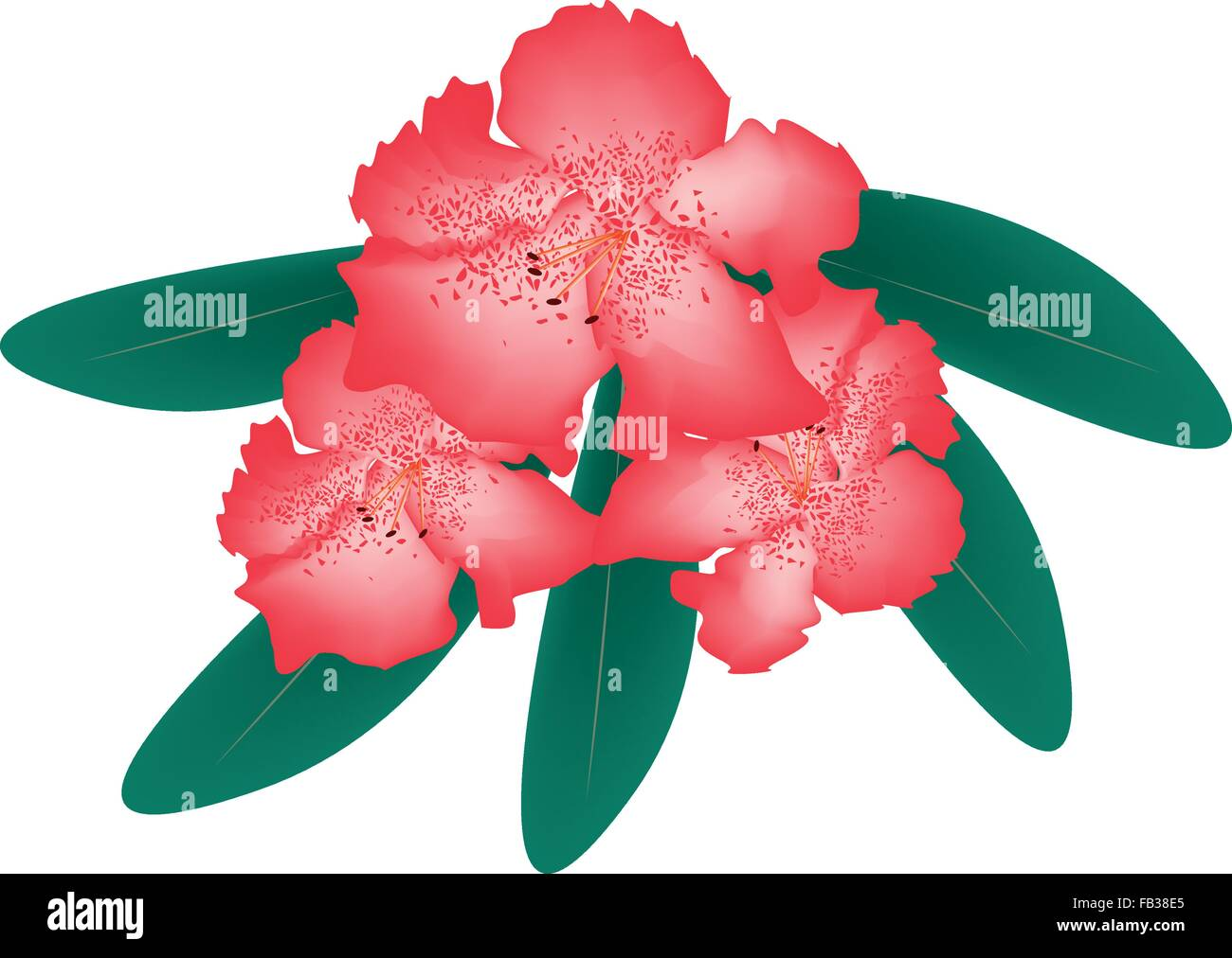 Beautiful Flower, Illustration of Red Rhododendron Ponticum Flowers with Green Leaves Isolated on White Background. - Stock Vector