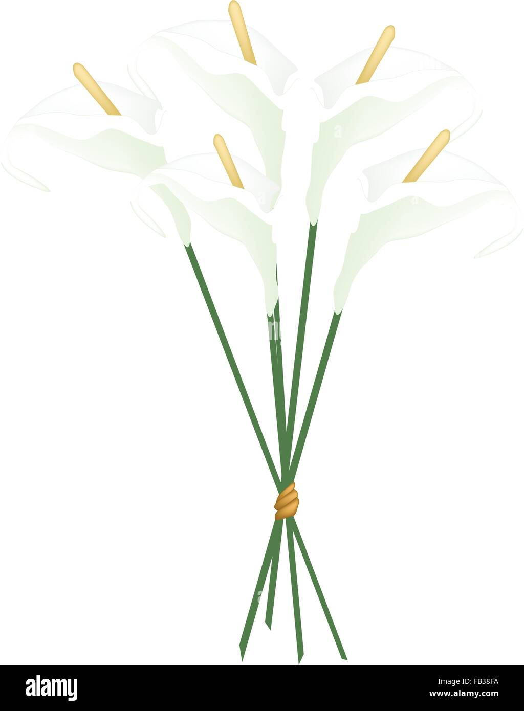 Beautiful Flower, Illustration of Bouquet of White Anthurium Flower or Flamingo Flower with Green Leaves Isolated - Stock Vector