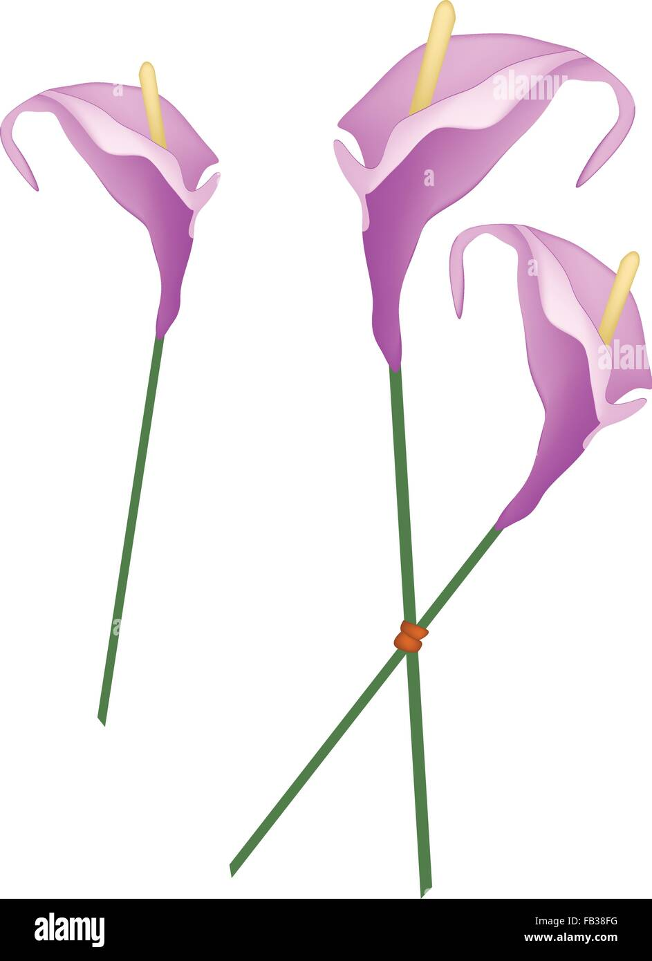 Beautiful Flower, Illustration of Purple Anthurium Flowers or Flamingo Flowers with Green Leaves Isolated on White - Stock Vector