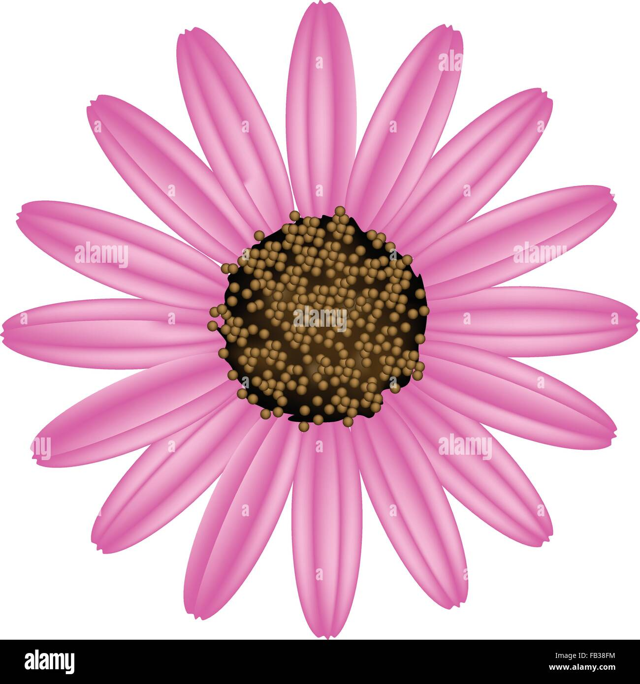 Cape Daisy Stock Vector Images Alamy