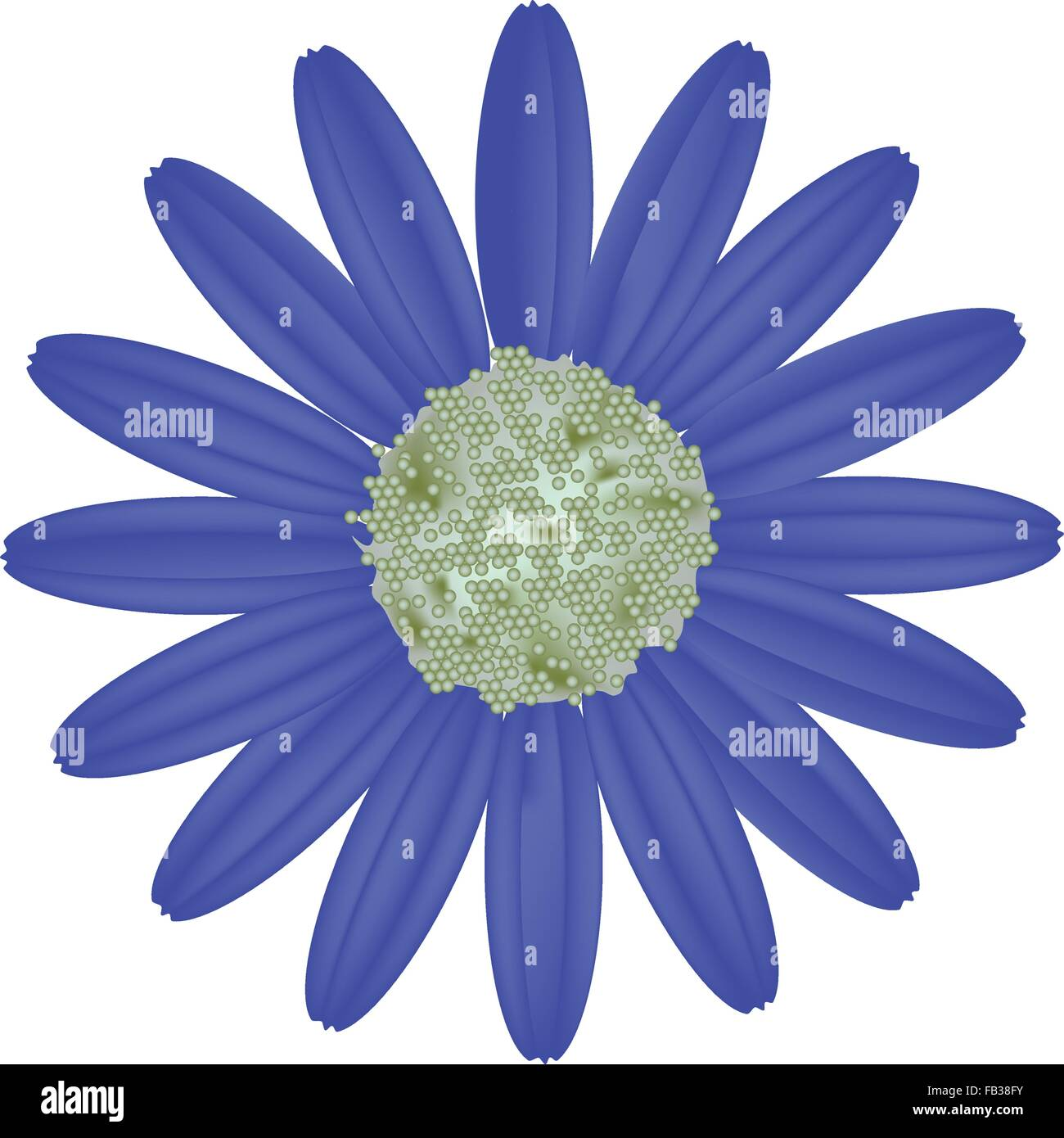 Asteraceae Family Stock Vector Images Alamy