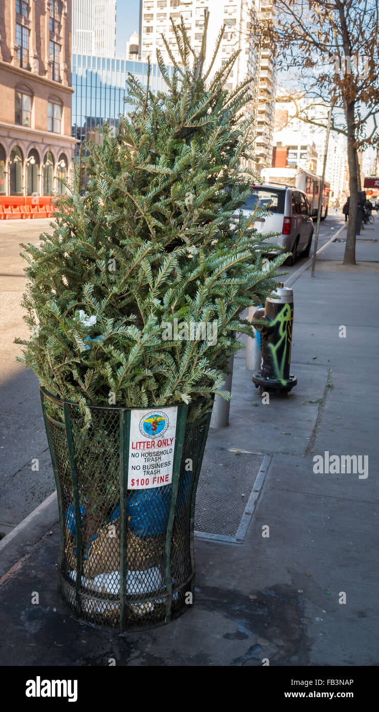 Discarded Christmas tree in a street litter bin on the pavement marks the end of the holiday period - Stock Image