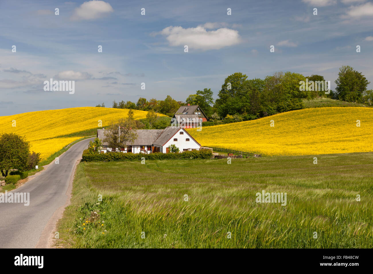 Danish landscape in Zealand, Denmark - Stock Image