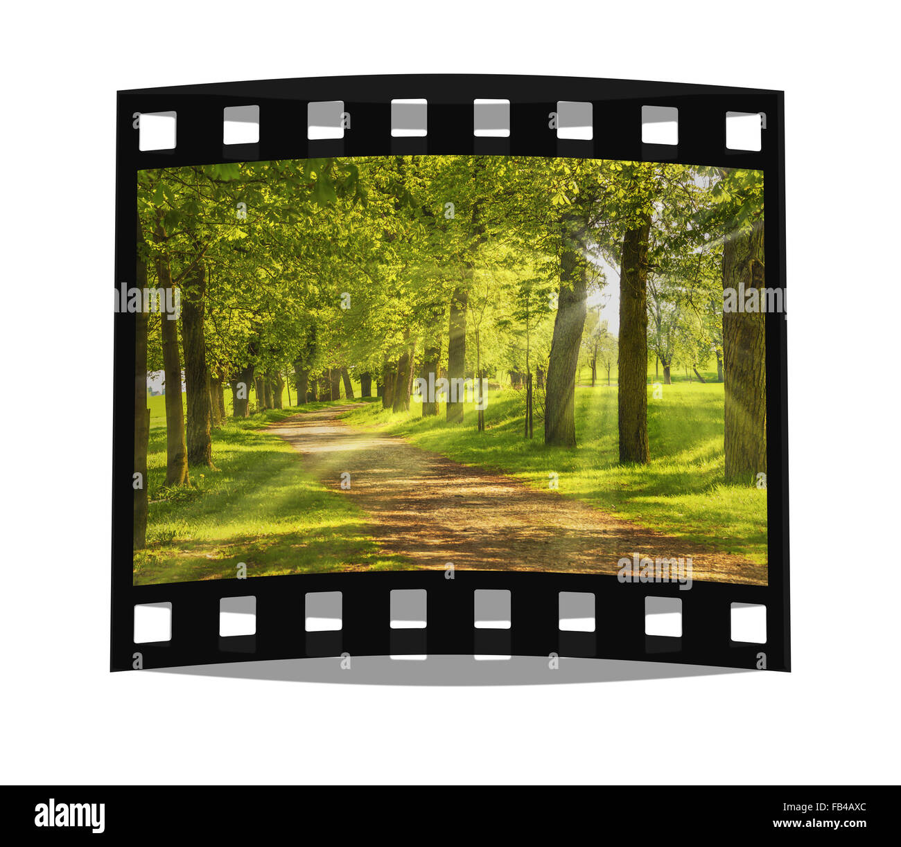 Avenue of trees, the sun shining through the trees - Stock Image