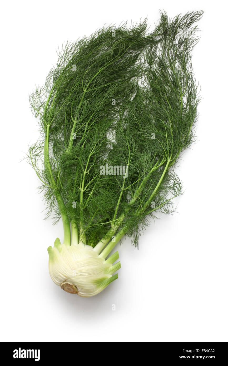 fresh finocchio, florence fennel bulb isolated on white background - Stock Image