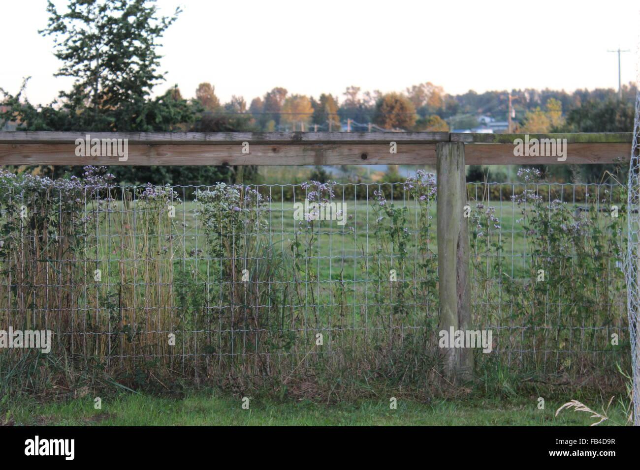 Farm Fence at Dusk - Stock Image