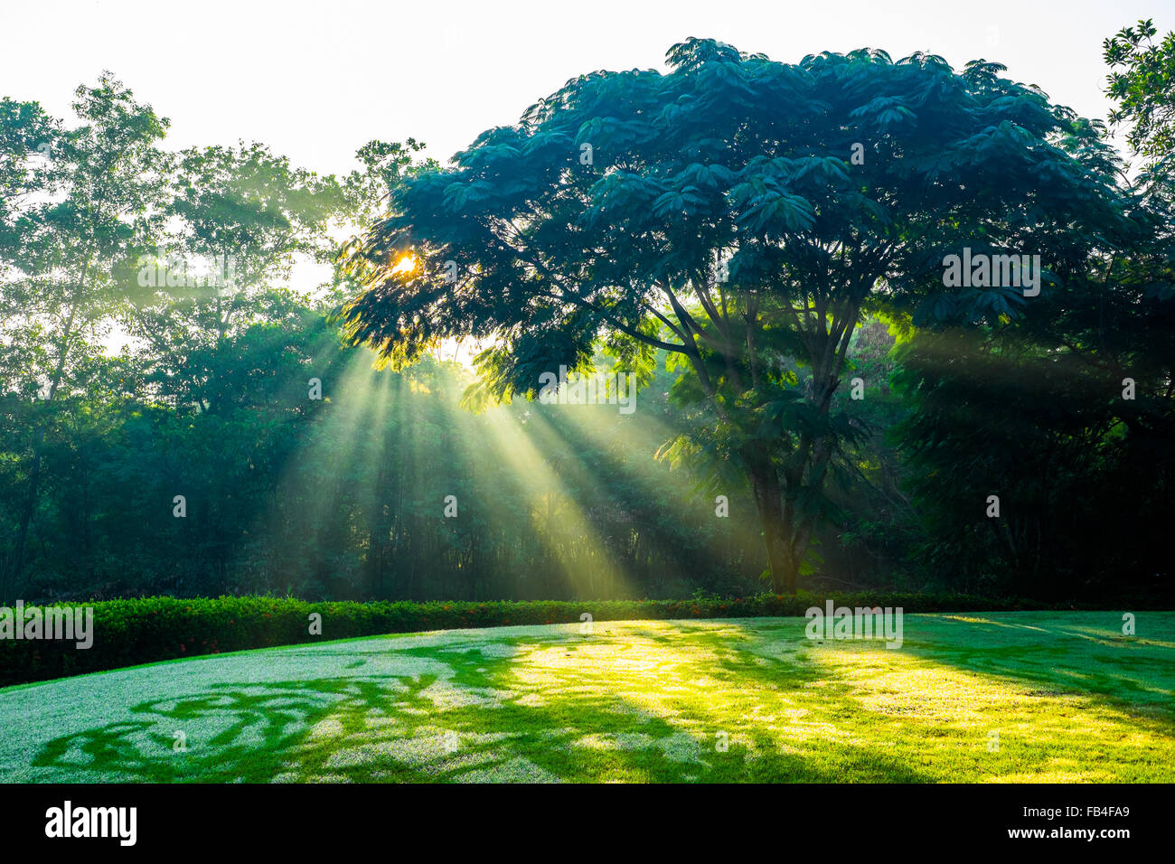 Sunlight shining through tree branches to golf teeing ground. - Stock Image