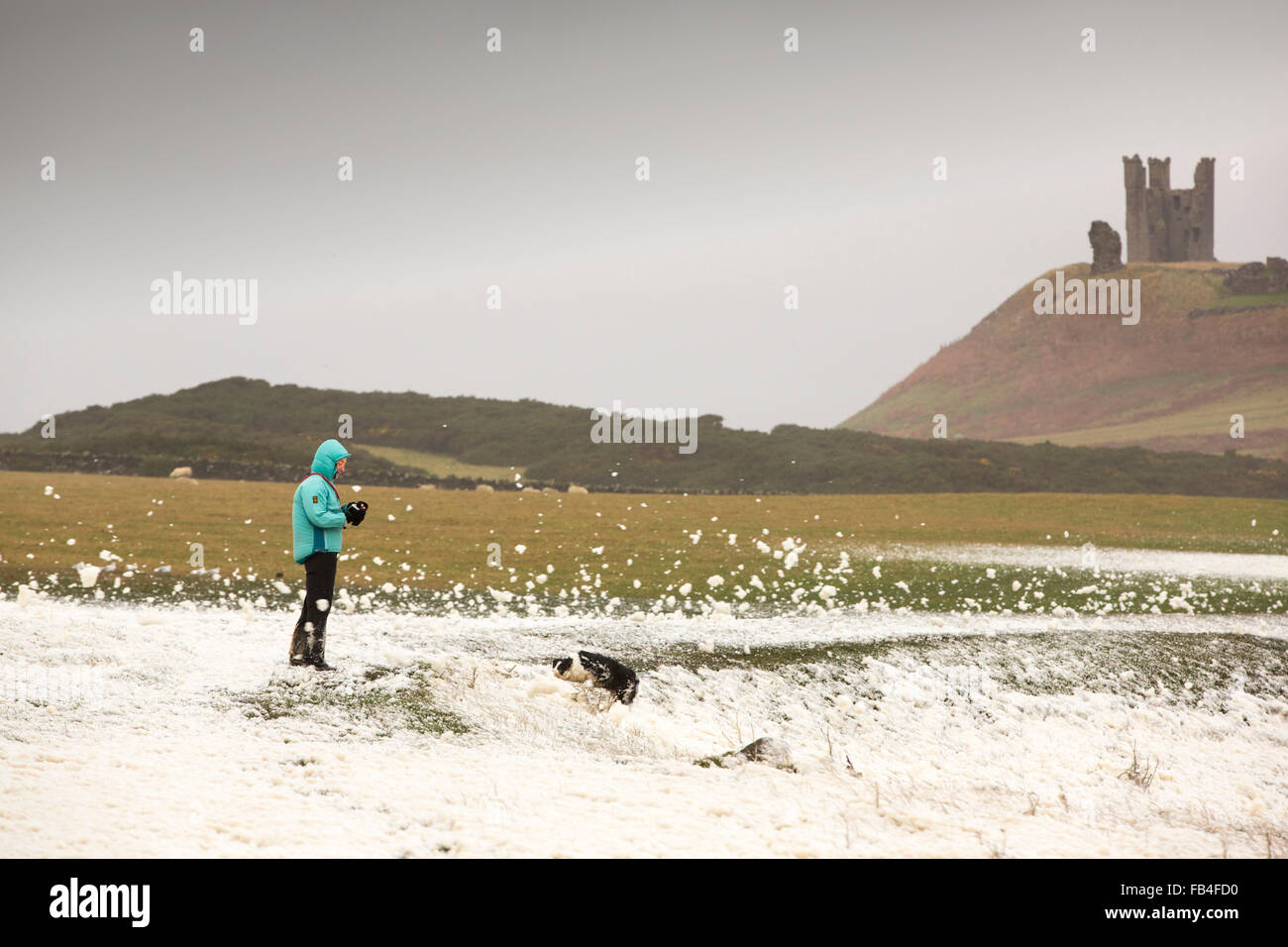 A woman bracing the storm surrounded by foam wipped up by storm waves blowing ashore at Craster on the Northumberland - Stock Image