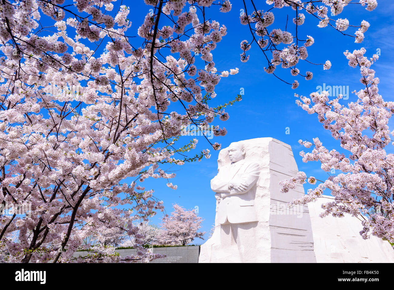 The memorial to the civil rights leader Martin Luther King, Jr. in Wasington DC, USA during the spring cherry blossom Stock Photo