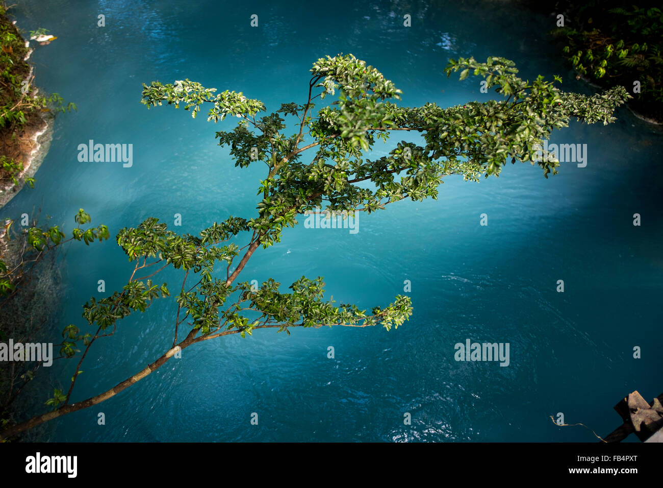 A branch of a tree bathed in sunlight hangs over the milky blue water of the Rio Celeste, Costa Rica. - Stock Image