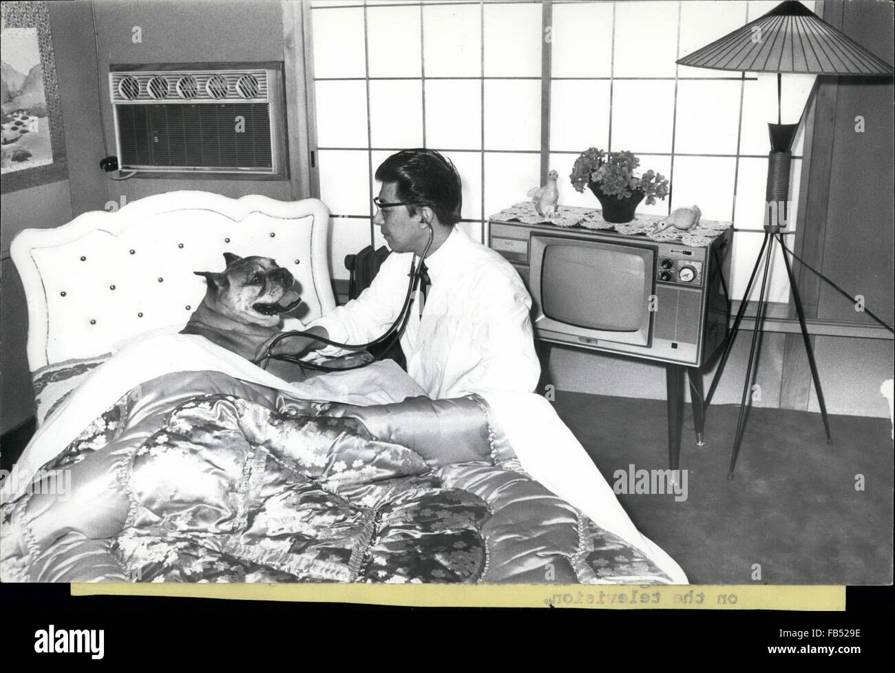 1968 luxury hotel for dogs tokoyo wealthy japanaese