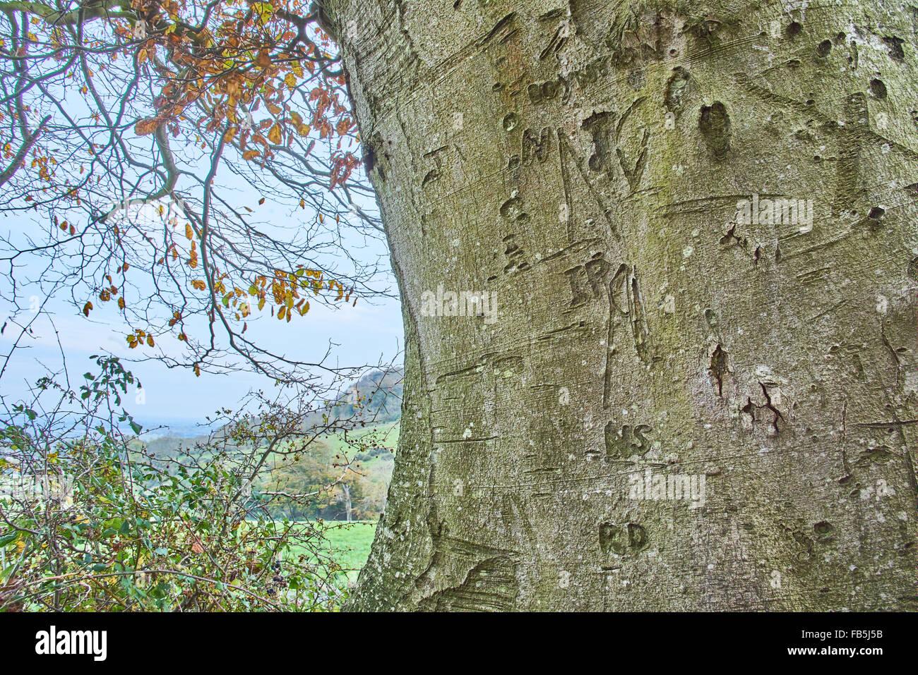 Graffiti on a tree trunk - Stock Image