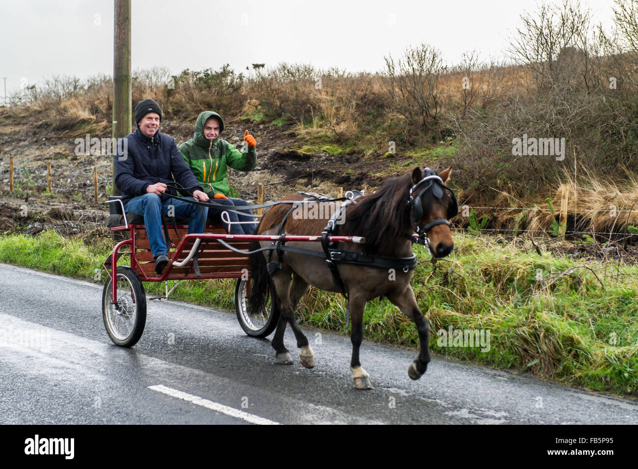 Drimoleague, Ireland. 10th January, 2016. Andy Collins, and his son John, are pictured driving Vinny O'Driscolls - Stock Image