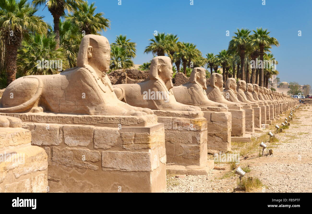 Avenue of Sphinxes in Luxor Temple, Luxor, Egypt - Stock Image