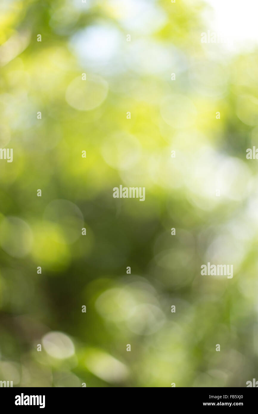Blurred background, nature green colors - Stock Image