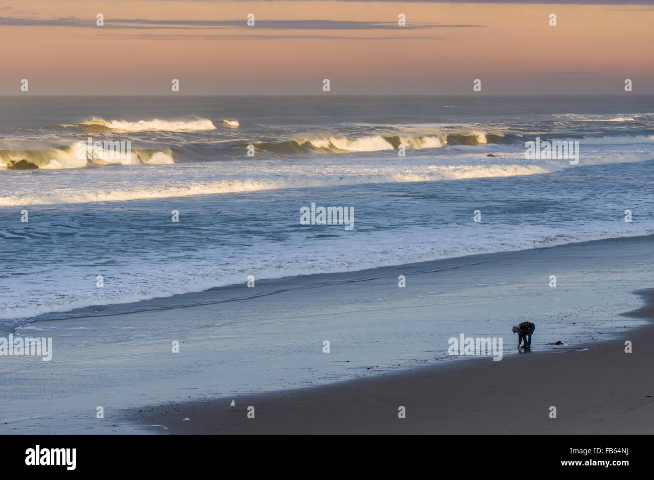 Beachcomber walking along the coast looking for finds, Oregon, USA Stock Photo