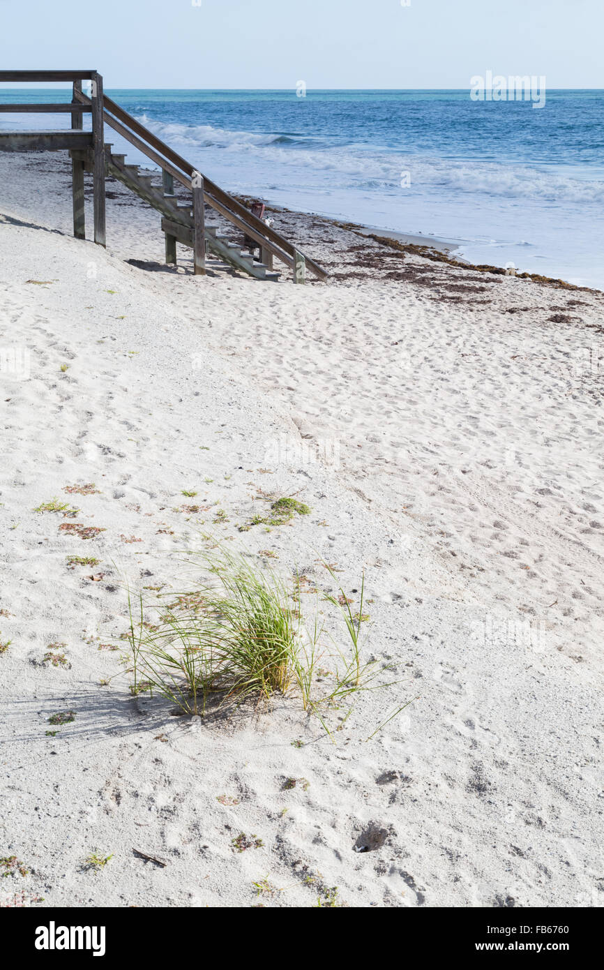 Vero Beach, USA. The grass on the sandy beach with a view of a boardwalk. - Stock Image