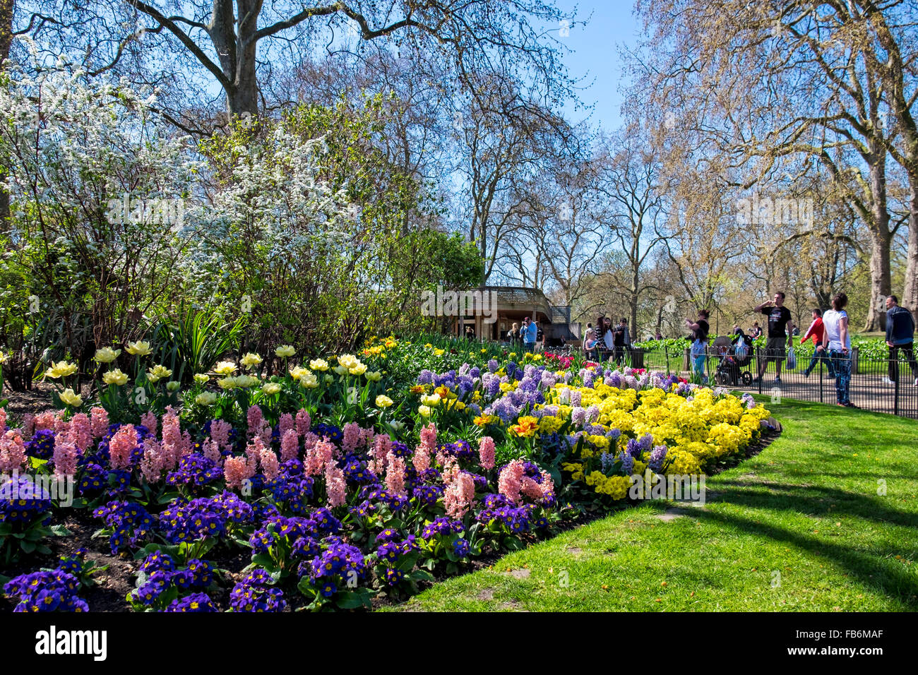 St James Park London Colourful Display Of Spring Flowers In The