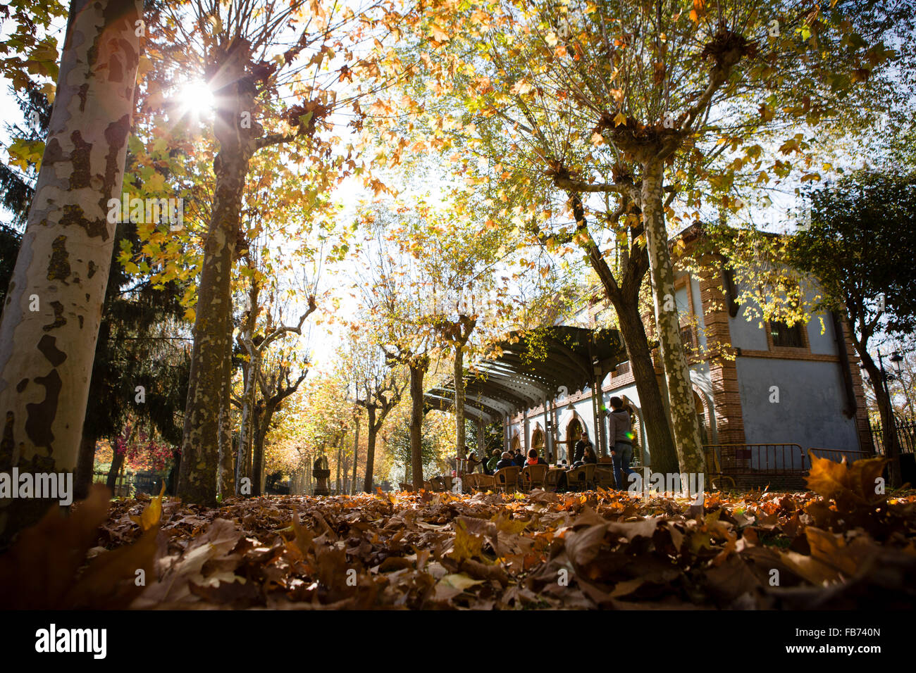31/10/15 Autumnal leaves at old railway station now Estacion bar / restaurant, Ezcaray, La Rioja, Spain. Photo by - Stock Image