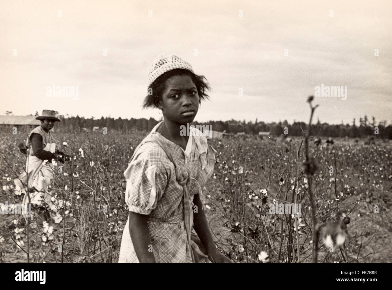 Cotton pickers, cotton picking, America, 1930's - Stock Image