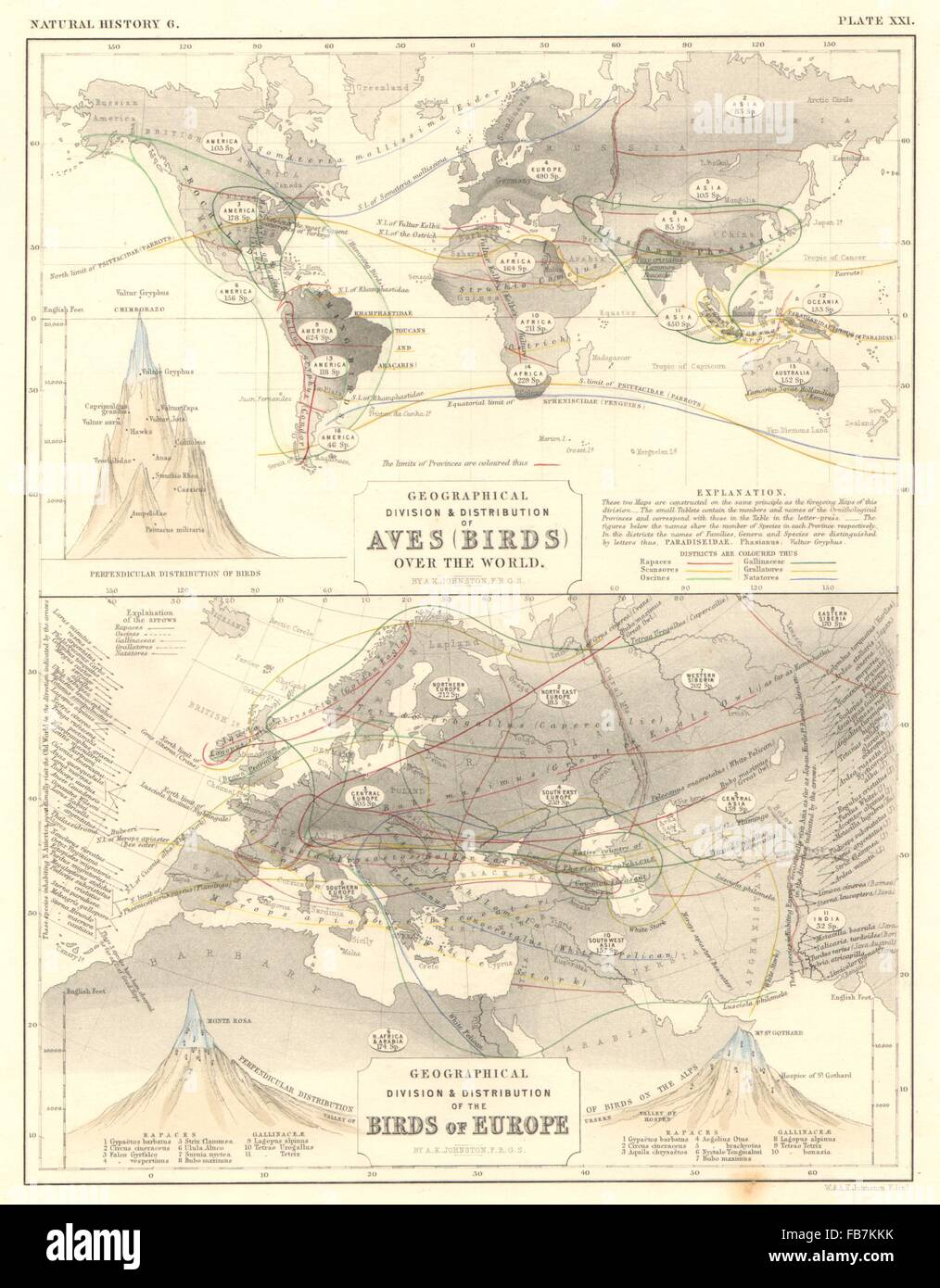 WORLD/EUROPE: Geographical & perpendicular distribution of ...