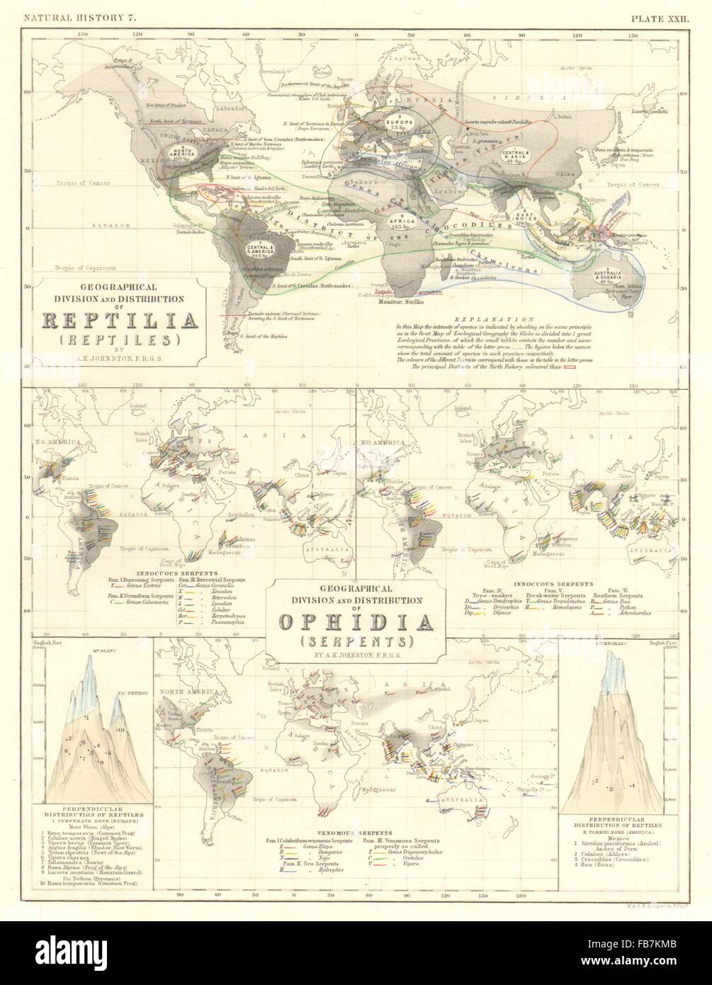 World Geographical Perpendicular Distribution Of Reptiles Stock
