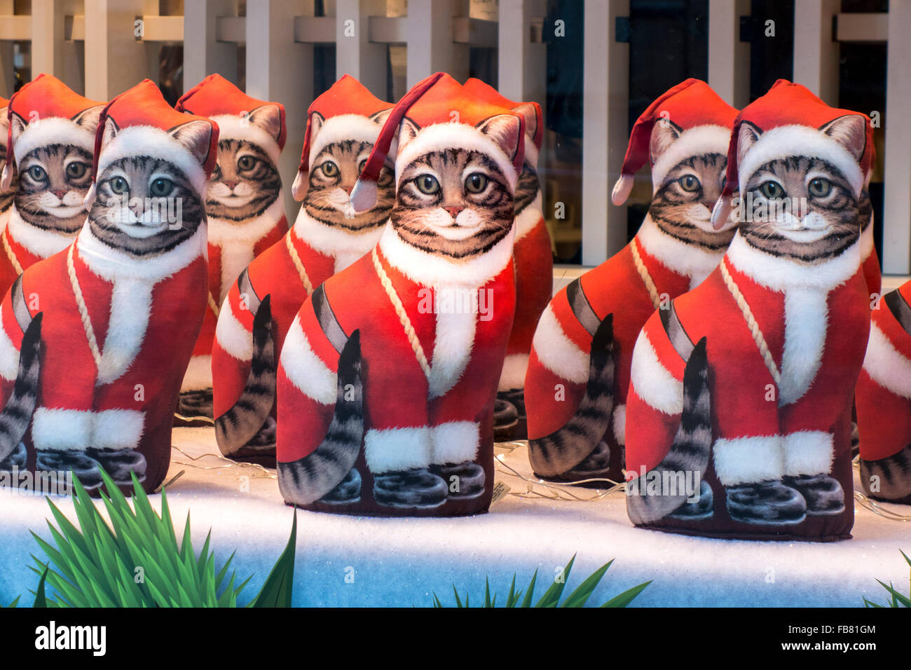 A row of identical Cats dressed as Santa in a shop window. Stock Photo