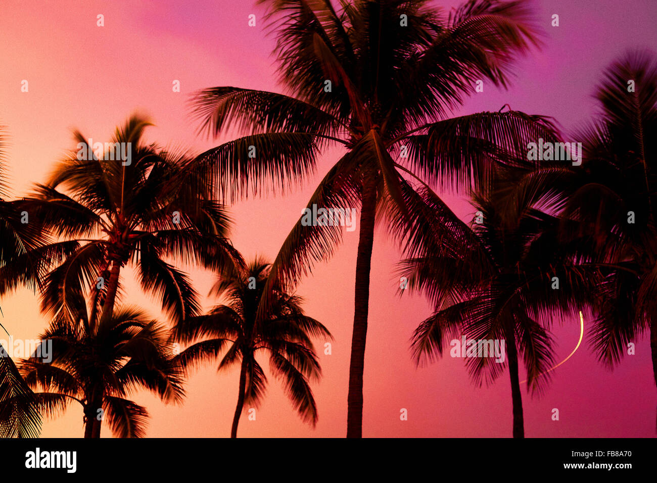 Low angle view of silhouette palm trees against sky during sunset - Stock Image