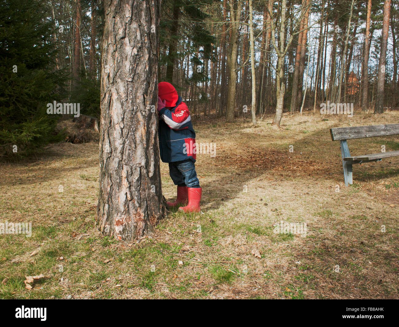 Sweden, Smaland, Horn, Boy (4-5) playing seek and hide amidst trees - Stock Image