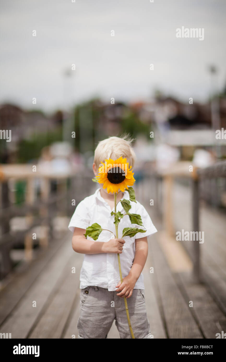 Germany, Bayern, Boy (4-5) holding sunflower - Stock Image