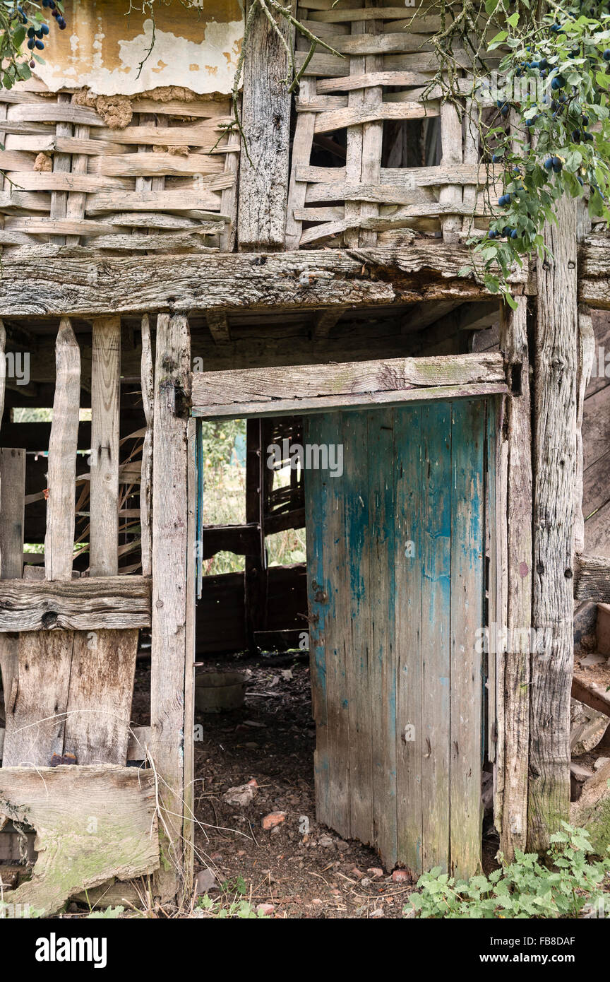 Herefordshire, UK. A derelict 16c timber framed cottage, showing the remains of wattle and daub walls - Stock Image