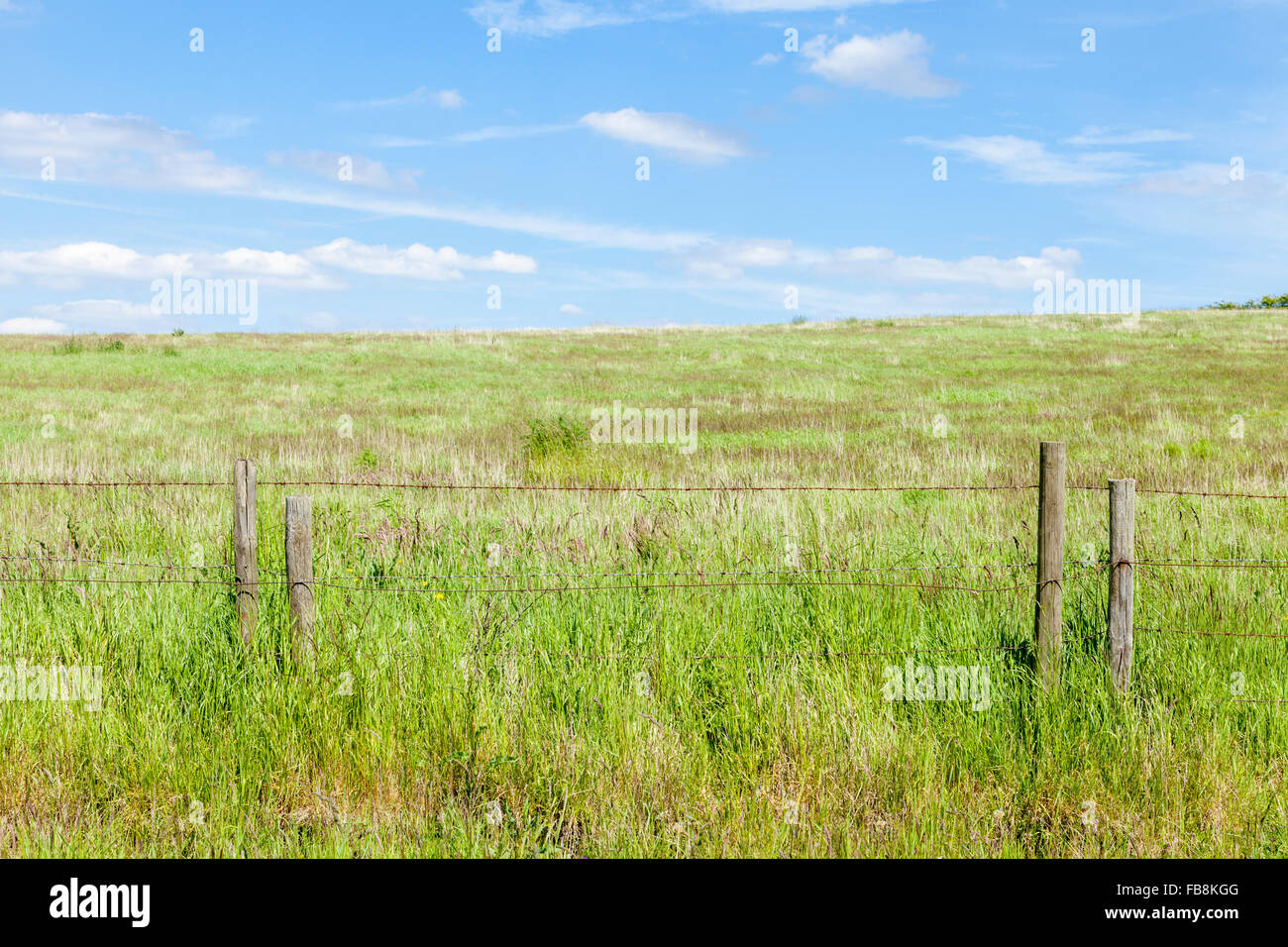 Field fenced off with a rusty barbed wire fence on wooden posts - Stock Image