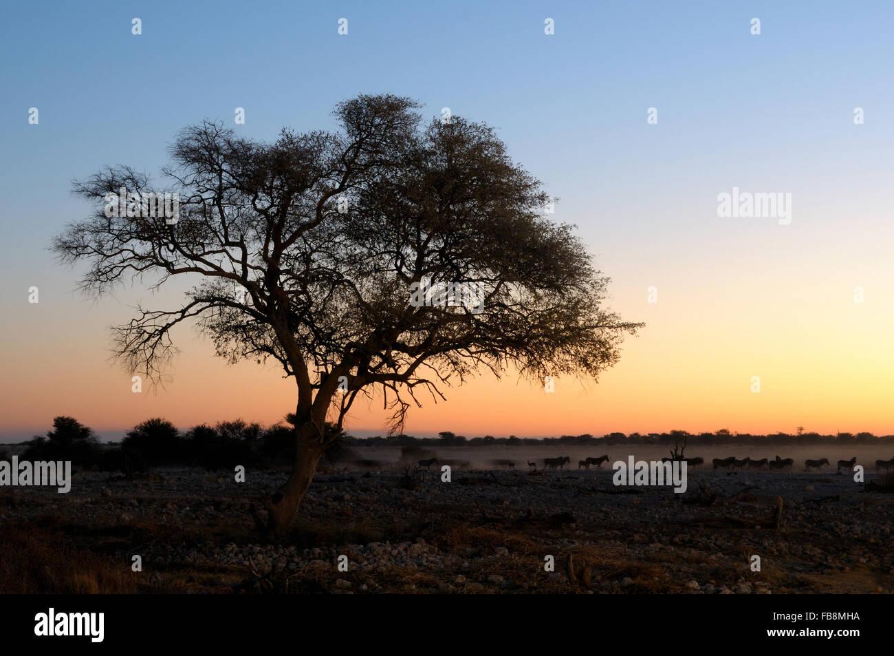 Sunset view of the waterhole, Okaukeujo Rest Camp,  Etosha National Park, Namibia - Stock Image