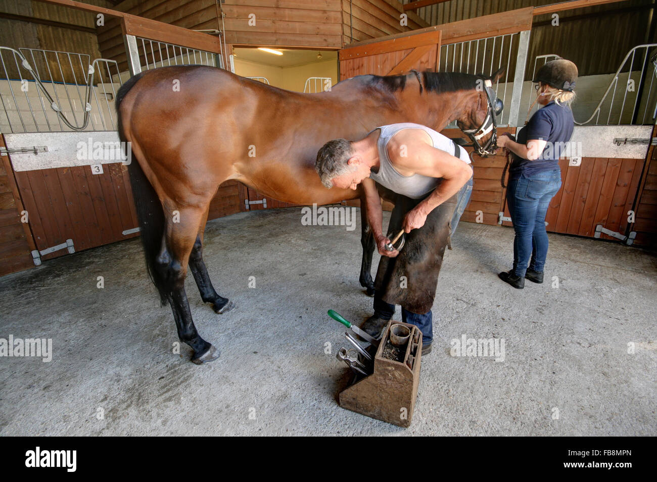 Man putting horse shoe on a horse at stables - Stock Image