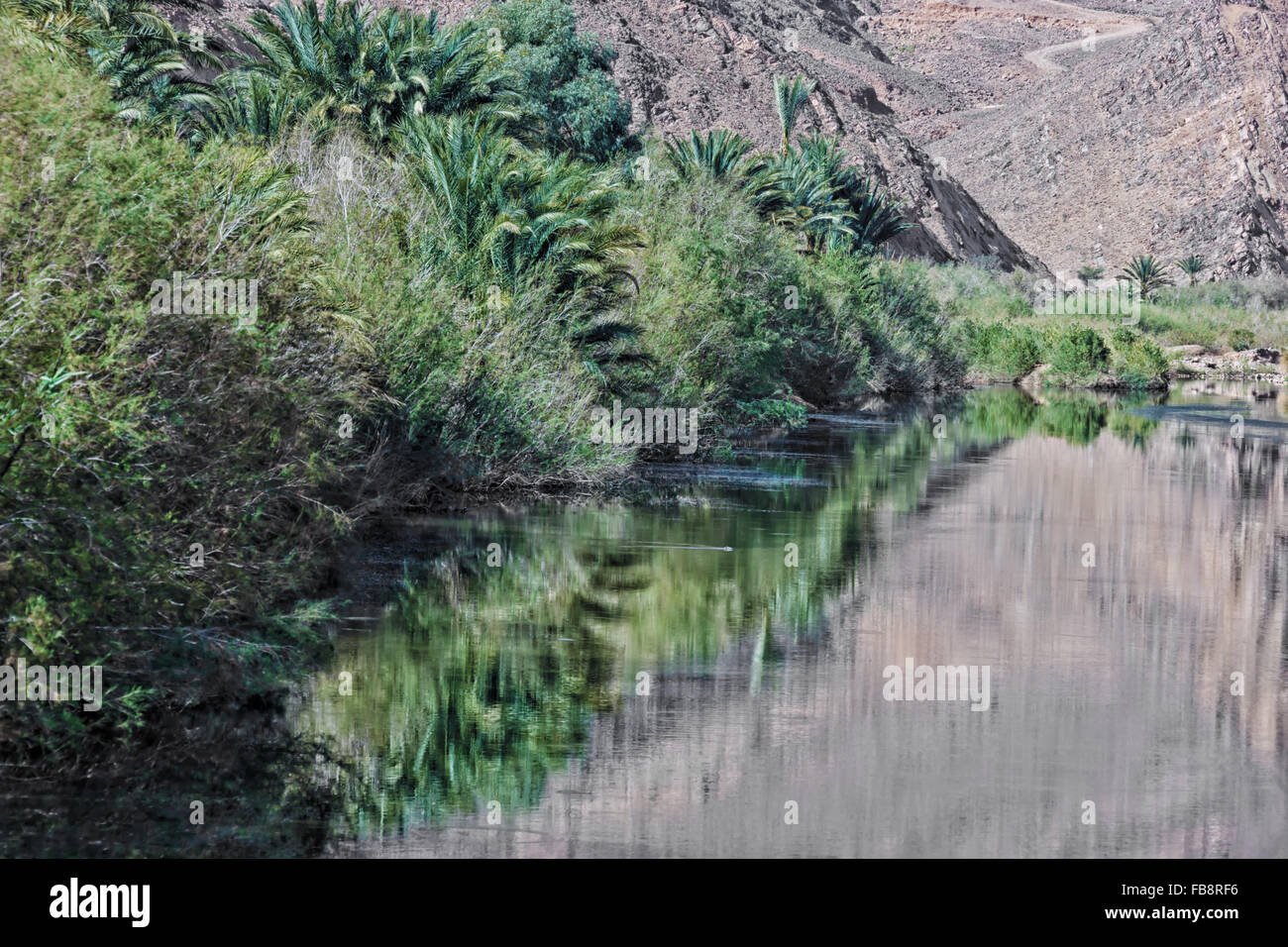Palms and trees along a river, with reflections in the water. - Stock Image