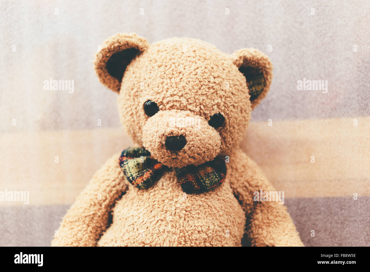 Soft bear brown color with butterfly tie. - Stock Image