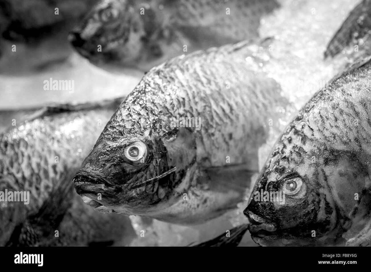 Fresh fish for sale in a fishmongers shop. - Stock Image