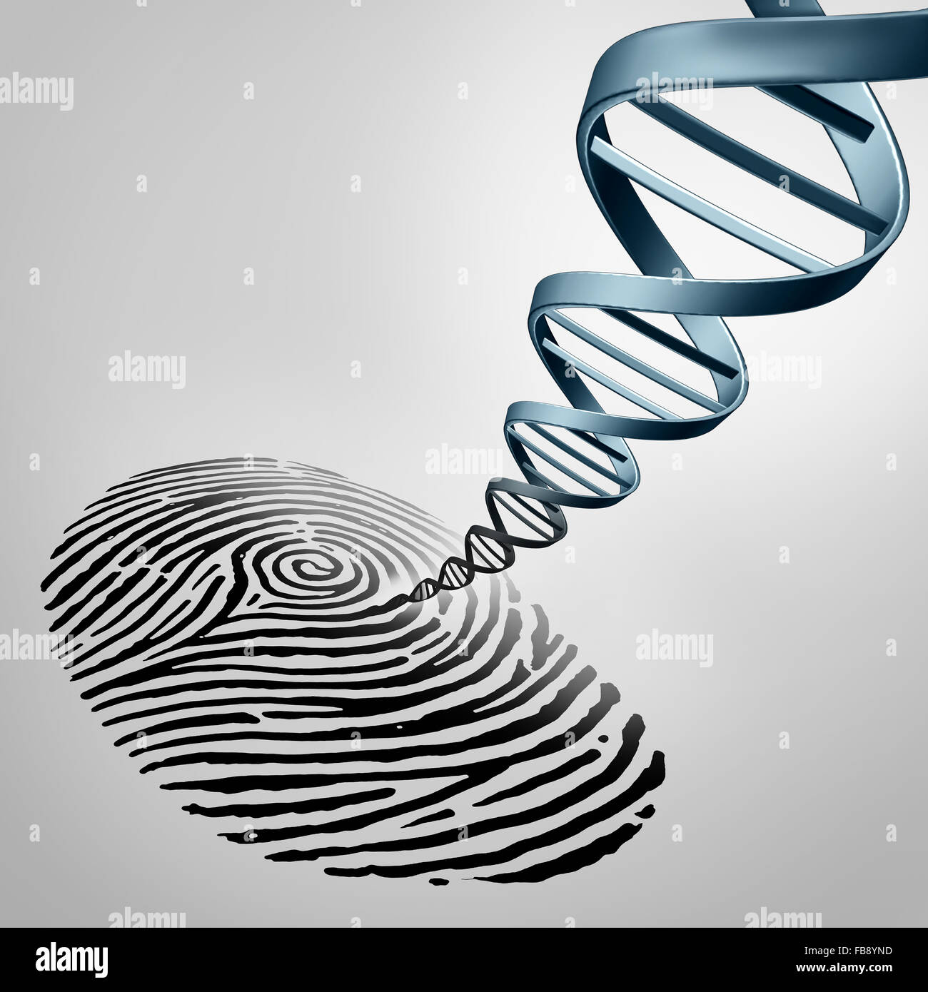 Genetic fingerprinting as a fingerprint with DNA emerging out as a medical identification symbol for a paternity - Stock Image