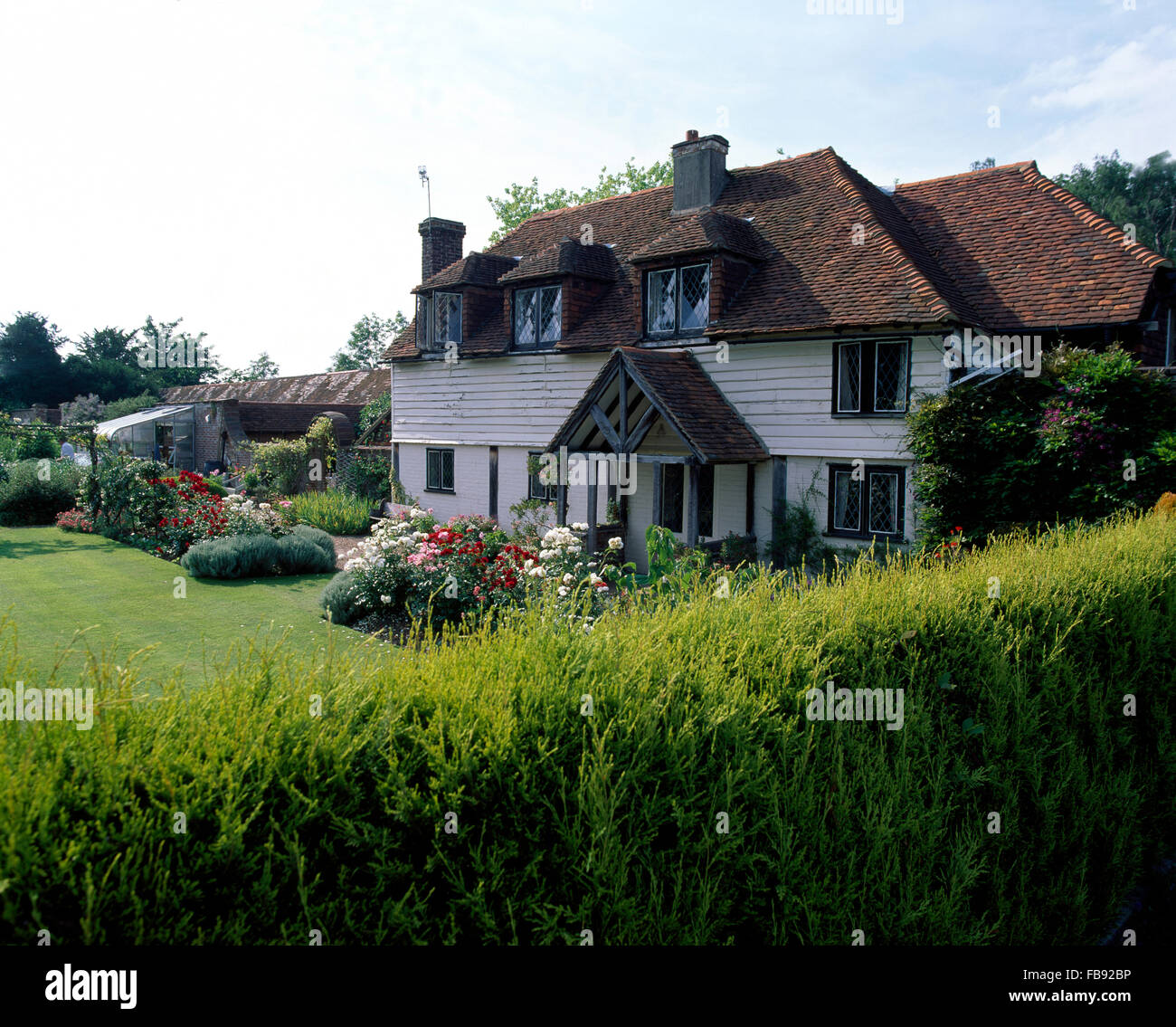 Exterior of a white clapboard cottage with a low conifer hedge bordering the garden - Stock Image