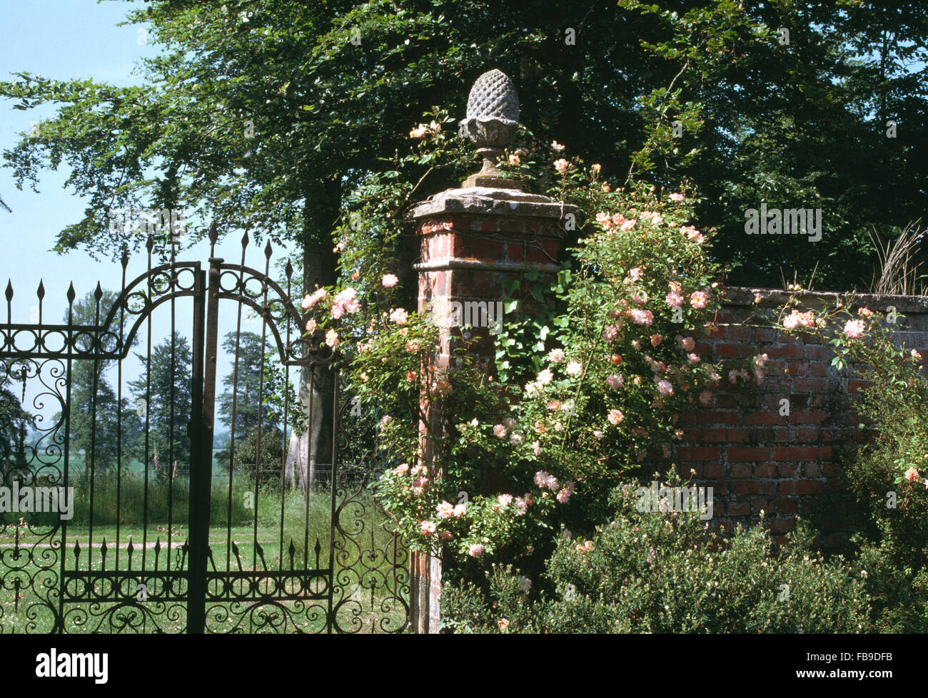 Ornate Wrought Iron Gates In Large Walled Garden With Pink Climbing Roses  On Wall And Pillar With A Stone Lollipop Finial