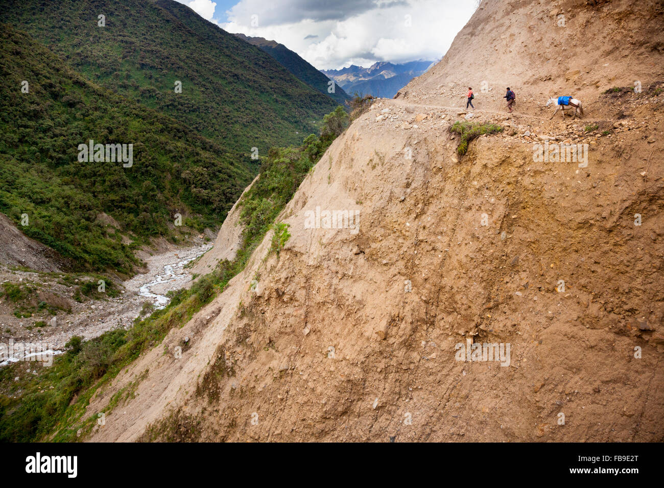 Arriero (muleskinner), pack mules and trek guide on the Choquequirao (Cradle of Gold) Inca Trail, Peru. - Stock Image