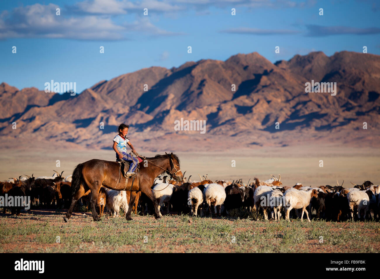 A young girl on a Kazakh horse rounds up the family herd near Achit Lake in remote far-western Mongolia. - Stock Image
