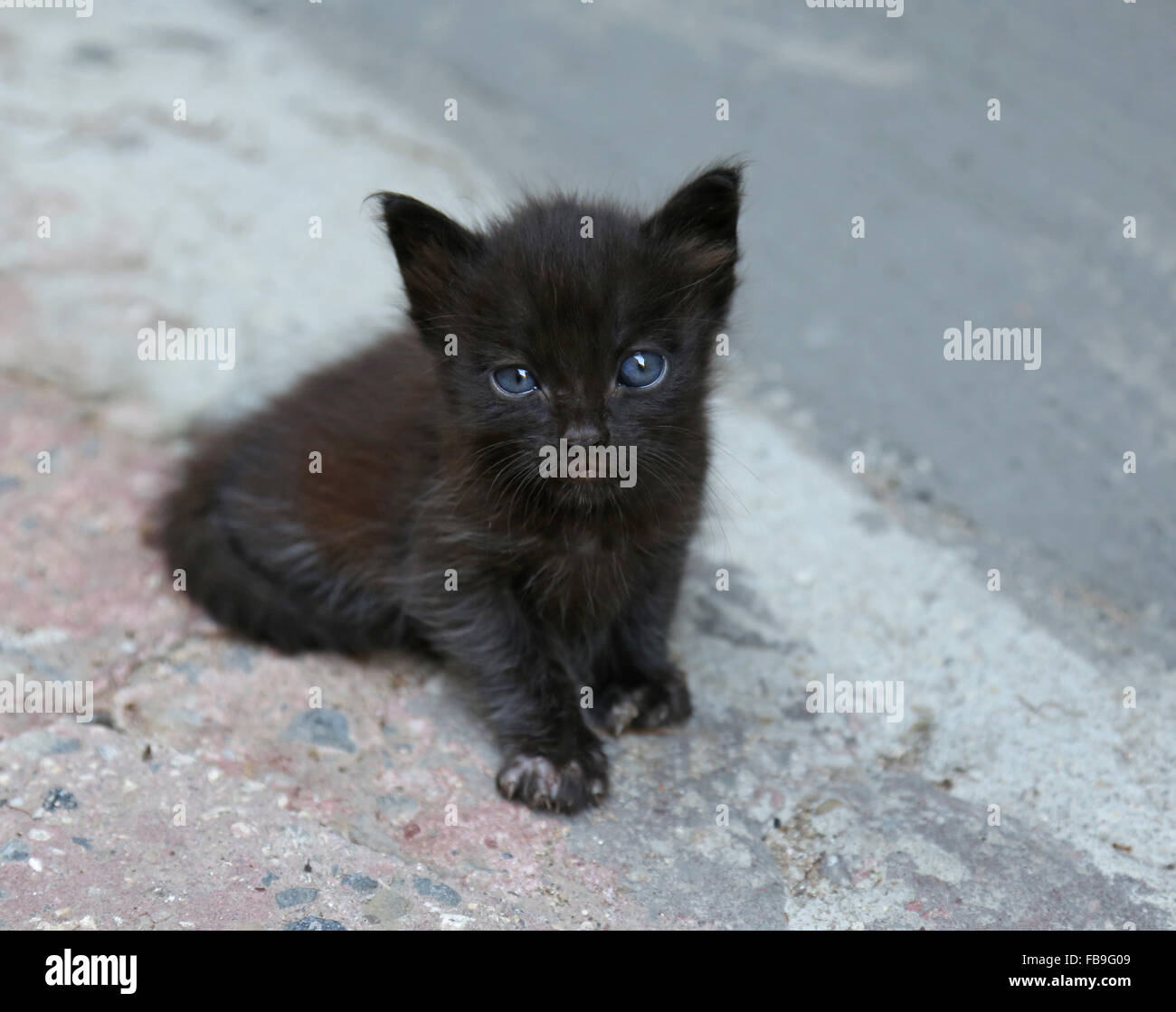 Black Cat With Blue Eyes High Resolution Stock Photography And Images Alamy