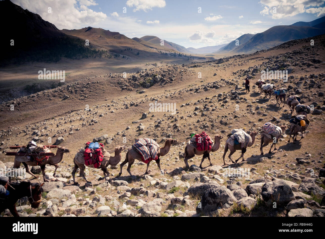 A camel train climbs Kharkhiraa Valley, Mongolia, where 3000 year-old Turkic stone piles mark the graves of ancient - Stock Image