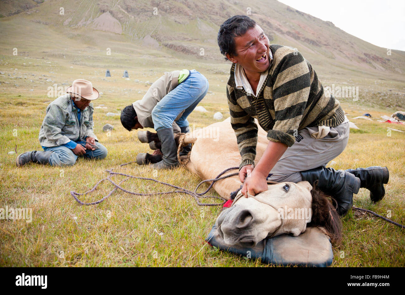 Nomad guides shoeing a horse in Kharkhiraa Turgen National Park, Mongolia. - Stock Image